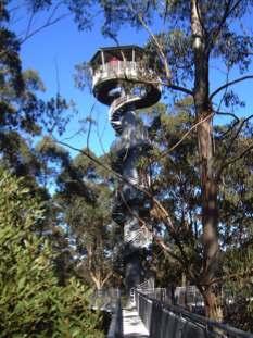 Otway Fly Treeptop Adventures